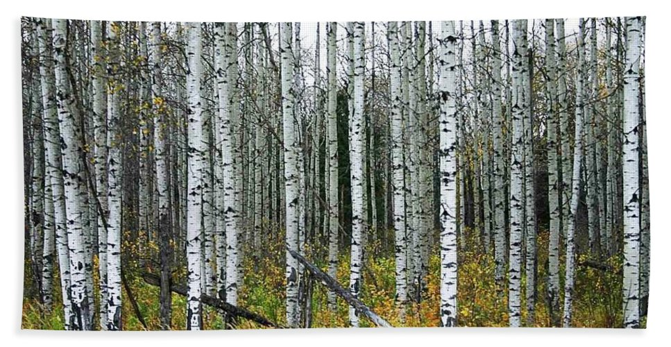 Aspens Hand Towel featuring the photograph Aspens by Nelson Strong