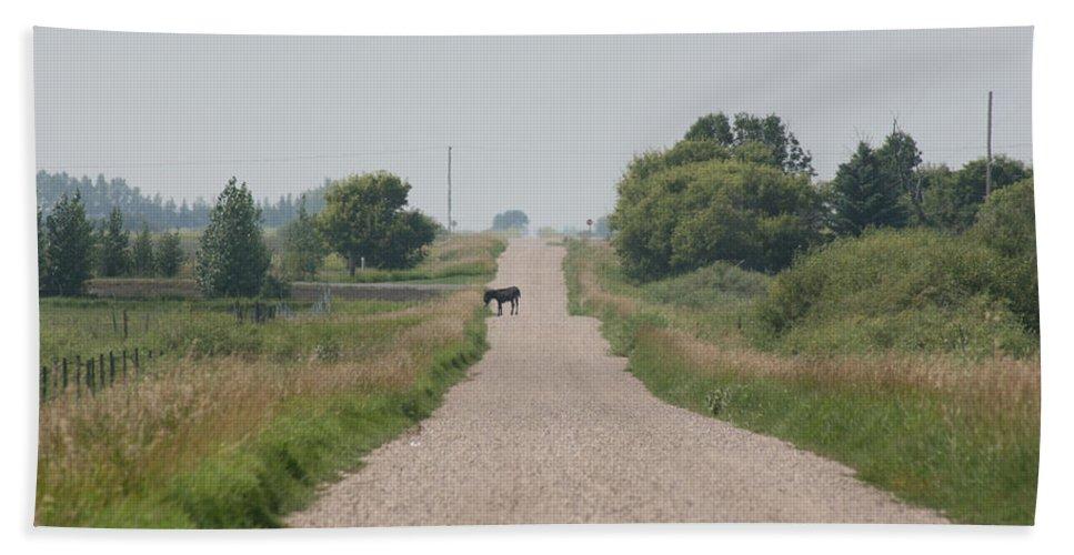 Jack Ass Donkey Road Trees Farm Ranch Mule Grass Prairie Saskatchewan Bath Sheet featuring the photograph Ass Next Door by Andrea Lawrence