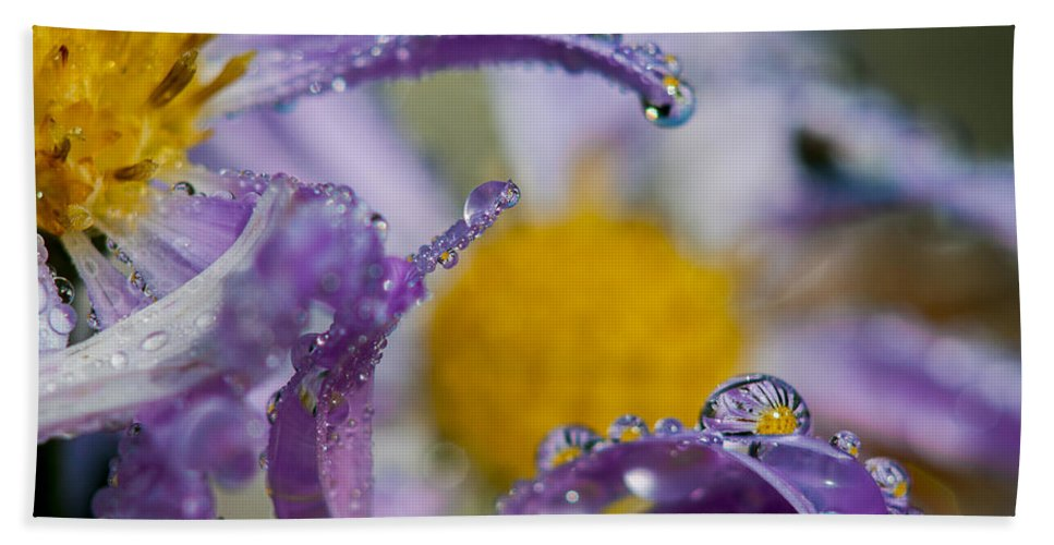 Dew Hand Towel featuring the photograph Aster And Dew by Robert Potts