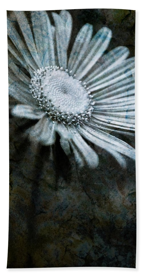 Aster Hand Towel featuring the photograph Aster On Rock by Onyonet Photo Studios