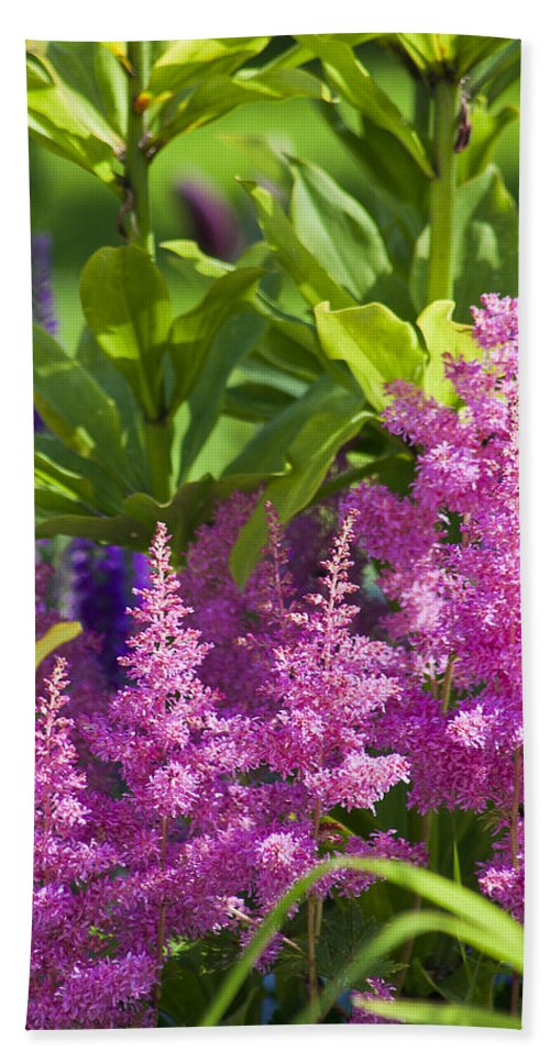Astilbe Bath Sheet featuring the photograph Astilbe In The Garden by Sandra Foster