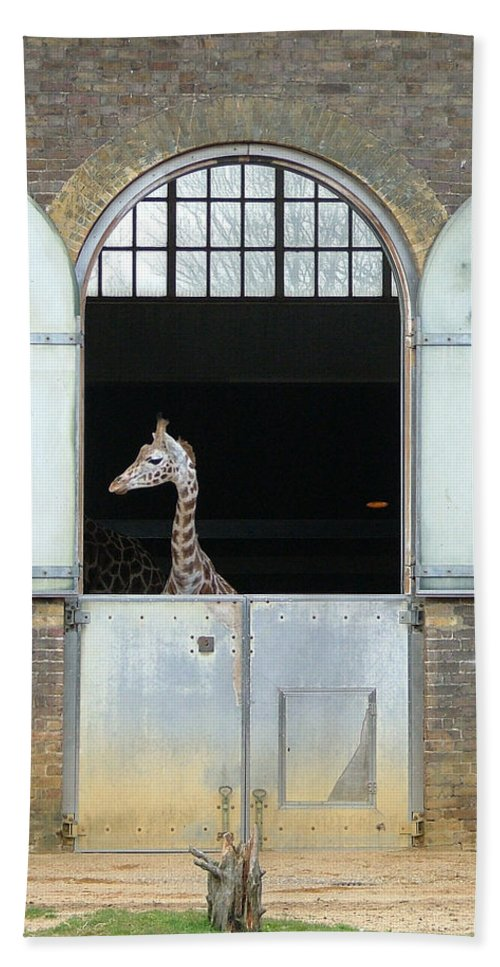 Giraffe Bath Sheet featuring the photograph Asymmetrical Giraffe by Heather Lennox