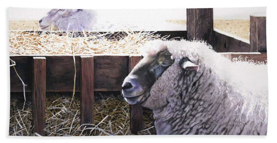 Sheep Bath Sheet featuring the painting At Rest by Denny Bond