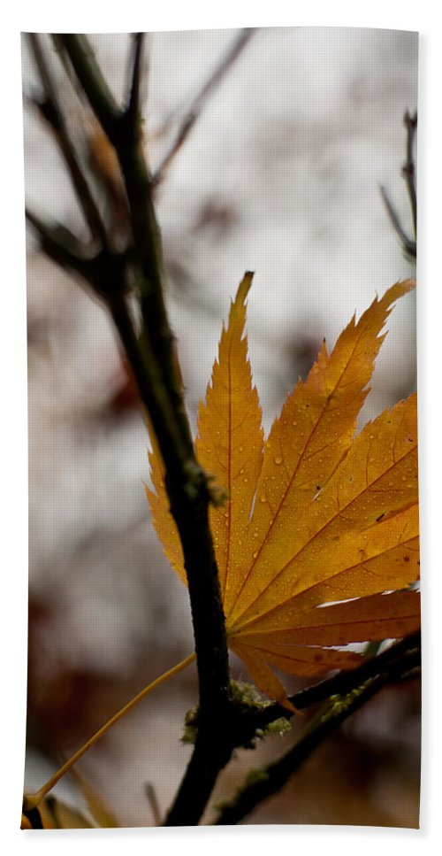 Autumn Bath Sheet featuring the photograph At Rest by Mike Reid