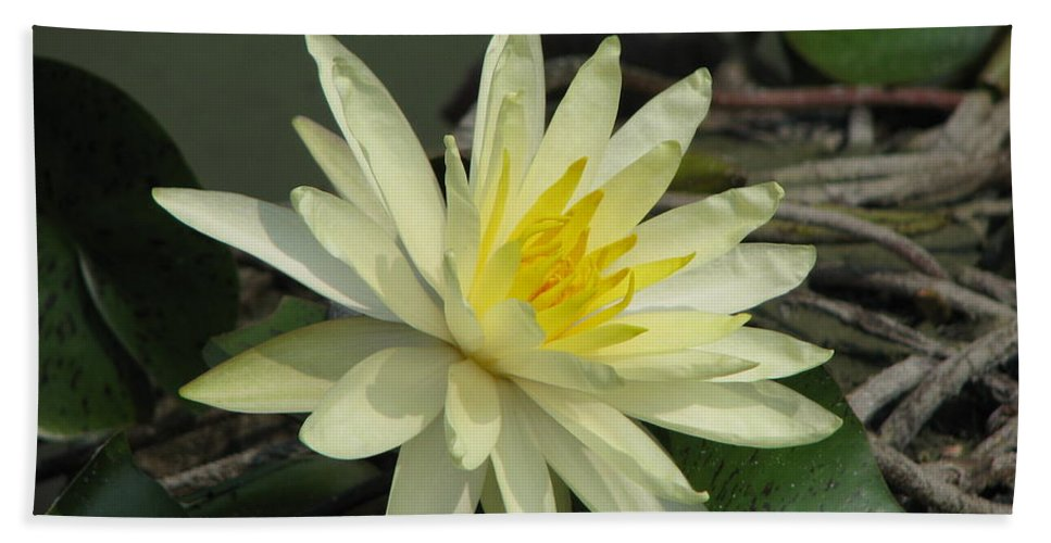 Lilly Hand Towel featuring the photograph At The Pond by Amanda Barcon