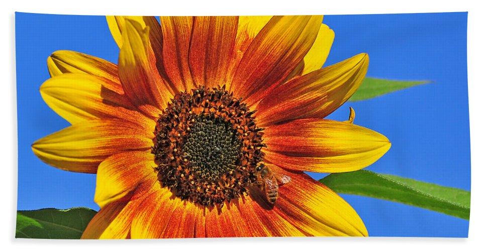 Sunflower Hand Towel featuring the photograph At The Source by Angela Maher