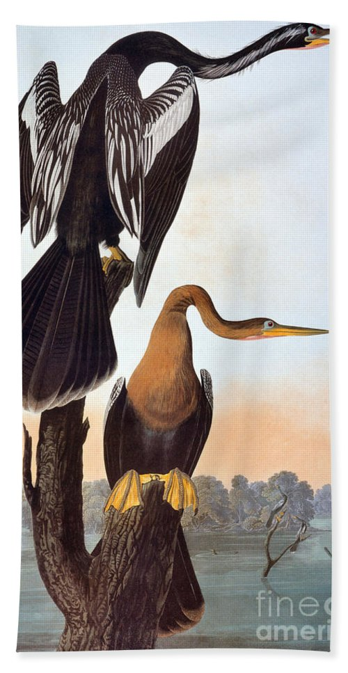 1838 Hand Towel featuring the photograph Audubon: Anhinga by Granger
