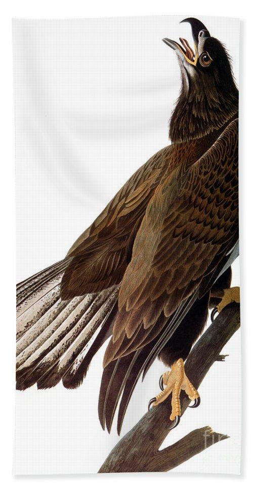 1838 Hand Towel featuring the photograph Audubon: Bald Eagle by Granger