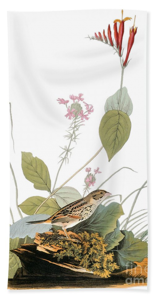 1838 Hand Towel featuring the photograph Audubon: Bunting by Granger