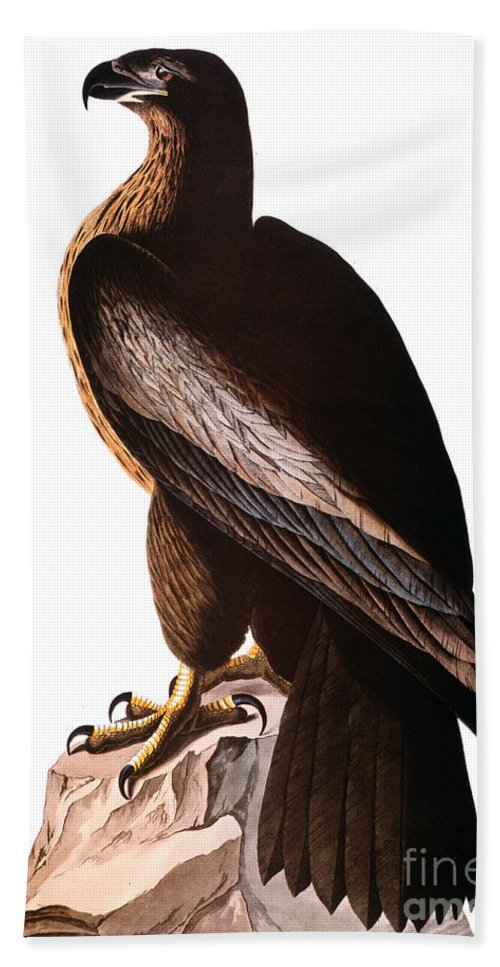 1838 Hand Towel featuring the photograph Audubon: Eagle by Granger