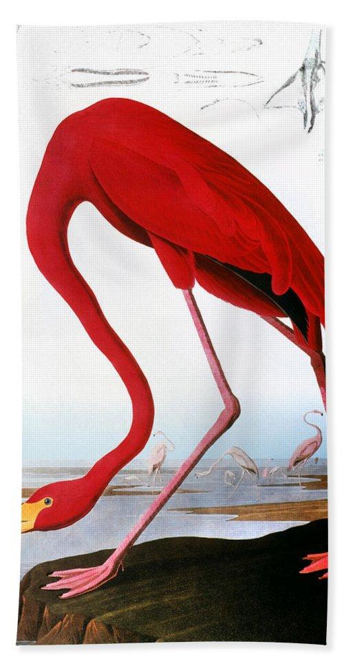 1827 Hand Towel featuring the photograph Audubon: Flamingo, 1827 by Granger