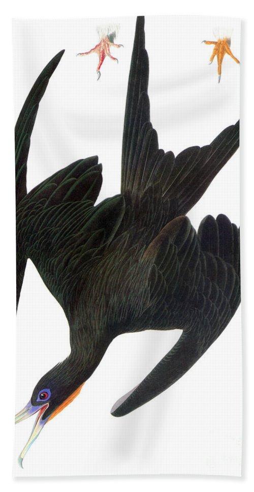 19th Century Hand Towel featuring the photograph Audubon: Frigatebird by Granger