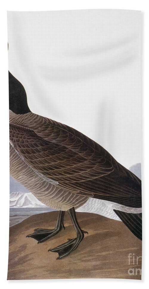 1827 Hand Towel featuring the photograph Audubon: Goose, 1827 by Granger