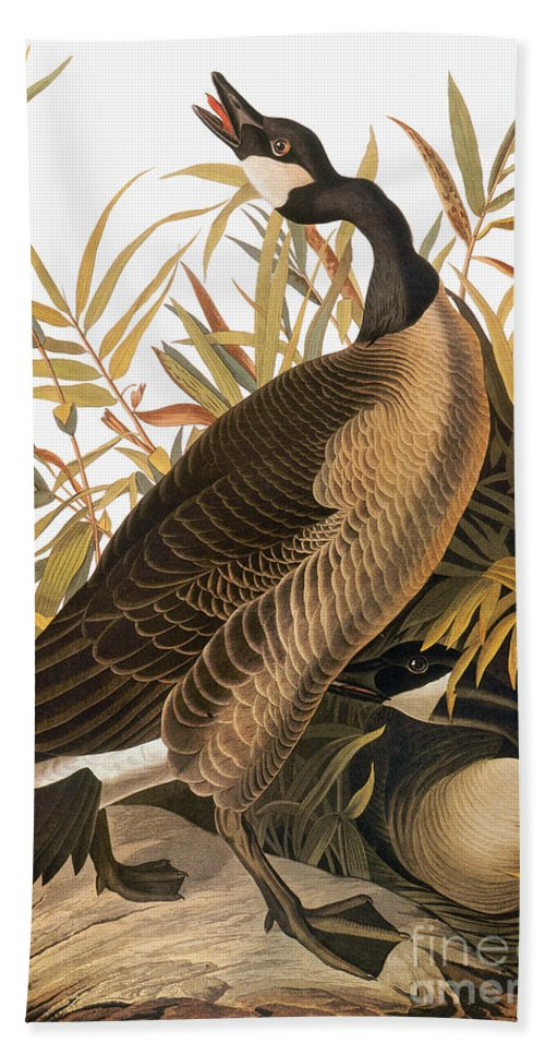 1838 Hand Towel featuring the photograph Audubon: Goose by Granger