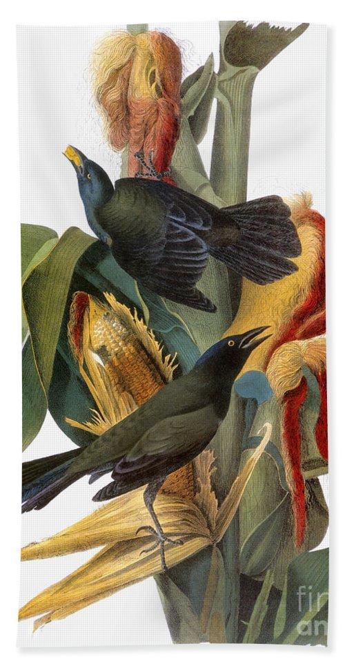1838 Hand Towel featuring the photograph Audubon: Grackle by Granger