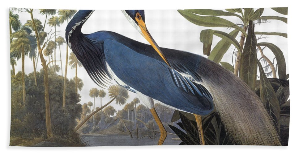 1827 Bath Towel featuring the photograph Audubon Heron, 1827 by John James Audubon