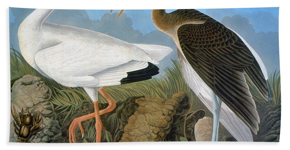 1838 Hand Towel featuring the photograph Audubon: Ibis by Granger