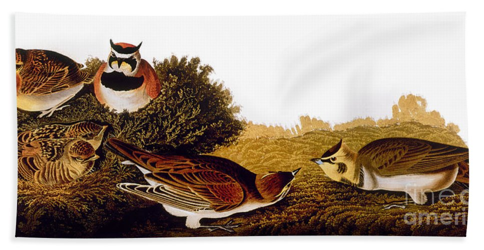 1838 Hand Towel featuring the photograph Audubon Lark by John James Audubon