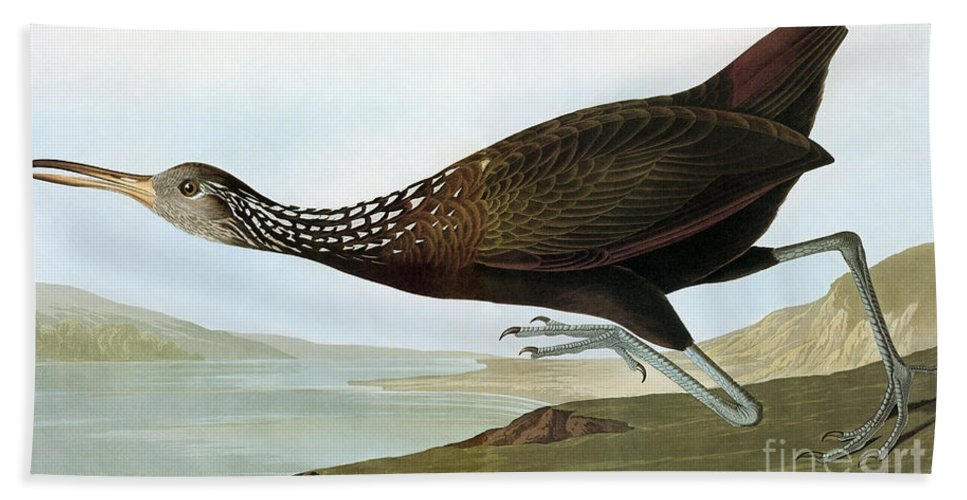 19th Century Hand Towel featuring the photograph Audubon: Limpkin by Granger