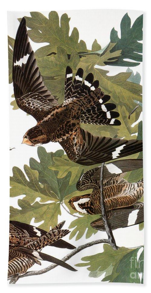 1838 Hand Towel featuring the photograph Audubon: Nighthawk by Granger