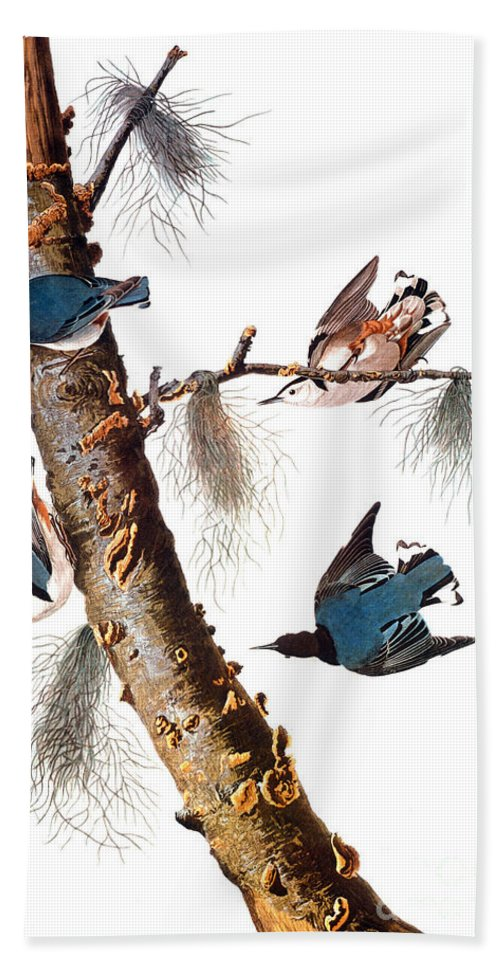 1838 Bath Towel featuring the photograph Audubon: Nuthatch by Granger
