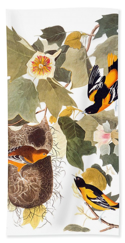 1838 Hand Towel featuring the photograph Audubon: Oriole by Granger