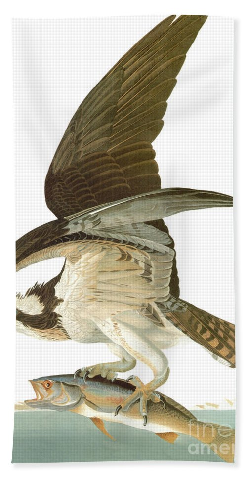 19th Century Hand Towel featuring the photograph Audubon: Osprey by Granger