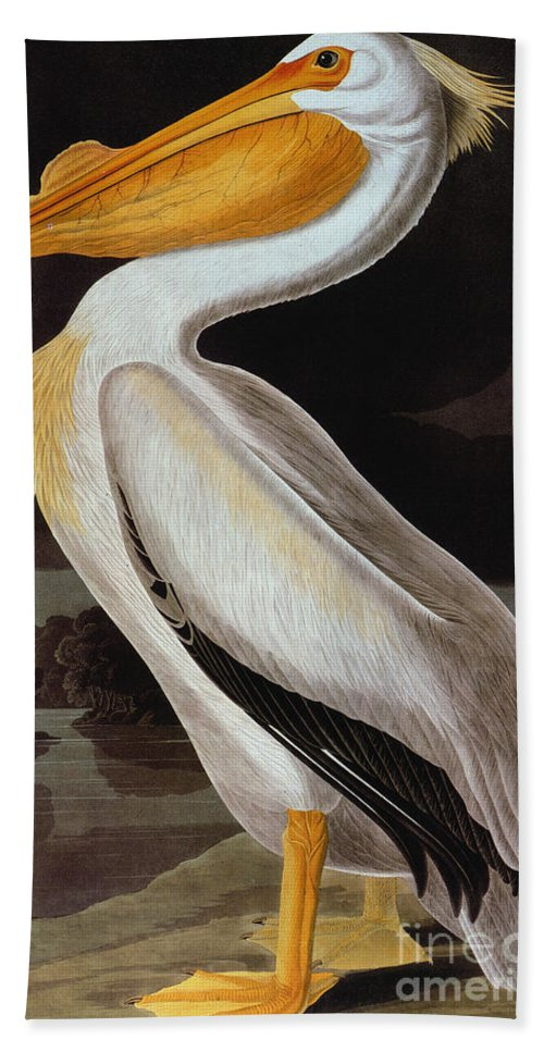 19th Century Hand Towel featuring the photograph Audubon: Pelican by Granger