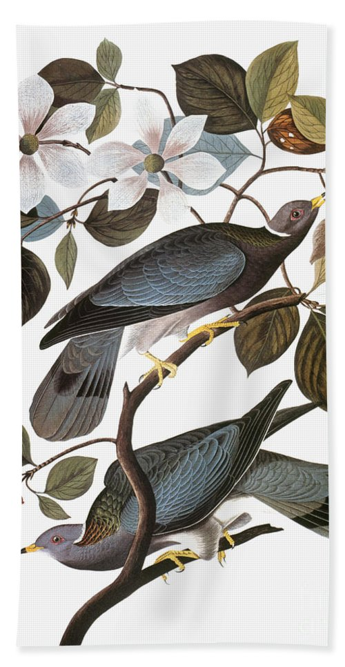 1838 Hand Towel featuring the photograph Audubon: Pigeon by Granger