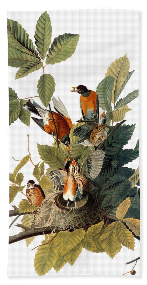 1838 Hand Towel featuring the photograph Audubon: Robin by Granger