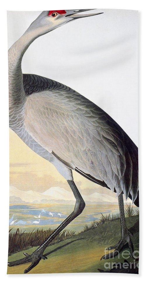 1827 Hand Towel featuring the photograph Audubon Sandhill Crane by John James Audubon