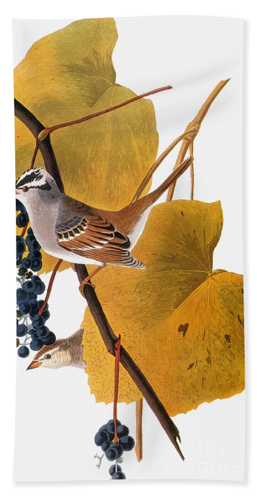 1838 Hand Towel featuring the photograph Audubon: Sparrow by Granger