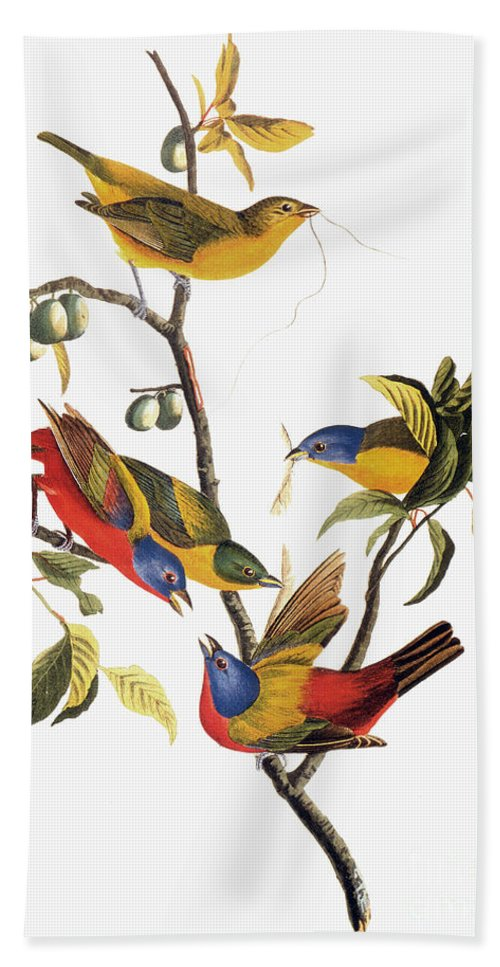1838 Hand Towel featuring the photograph Audubon: Sparrows by Granger