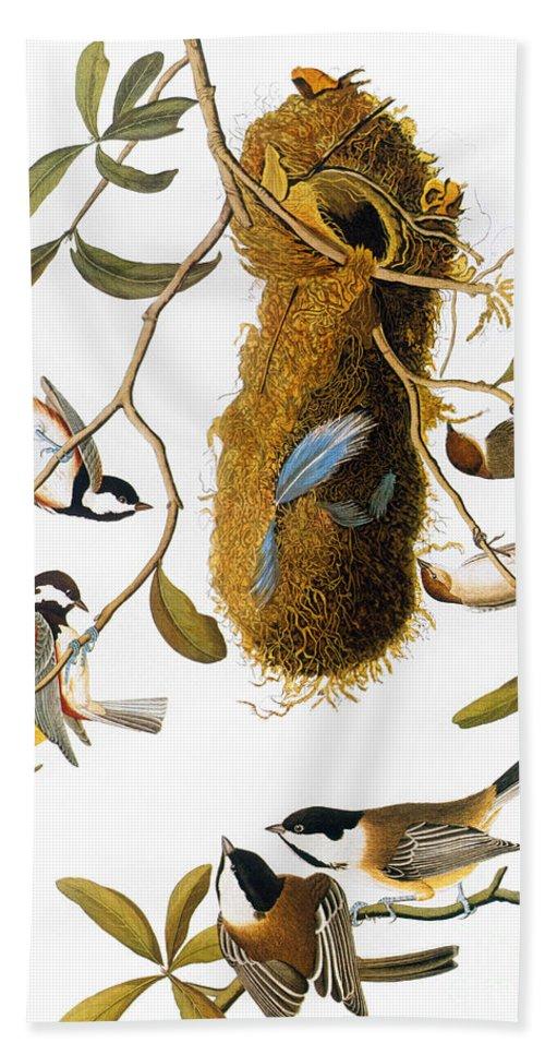 1838 Hand Towel featuring the photograph Audubon: Titmouse by Granger
