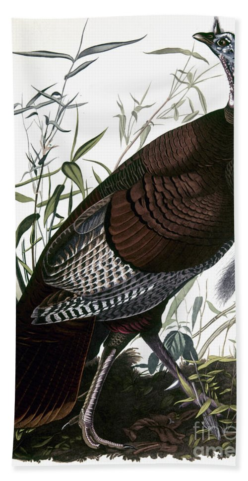1838 Hand Towel featuring the photograph Audubon: Turkey by Granger