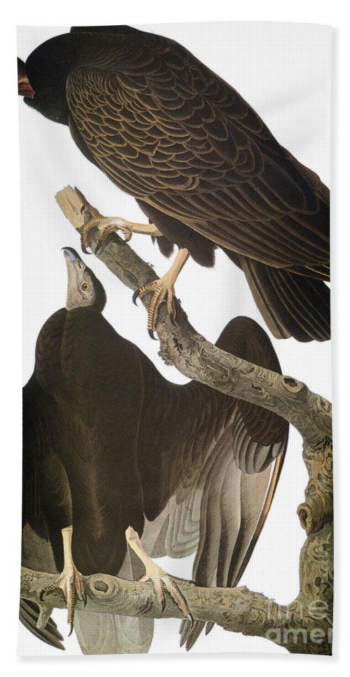 1827 Hand Towel featuring the photograph Audubon: Turkey Vulture by Granger