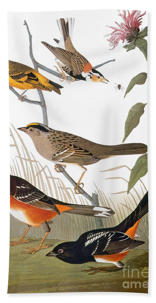 1838 Hand Towel featuring the photograph Audubon: Various Birds by Granger