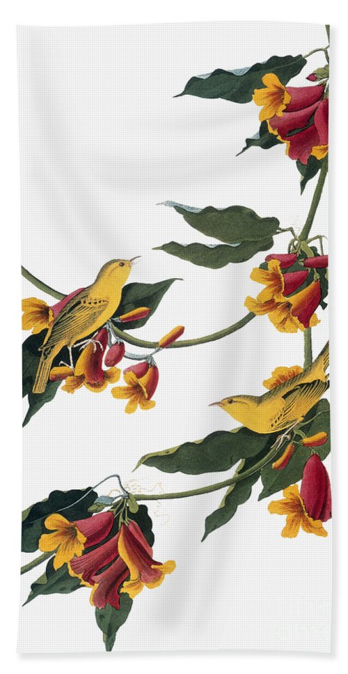 1827 Hand Towel featuring the photograph Audubon: Vireo, 1827-38 by Granger