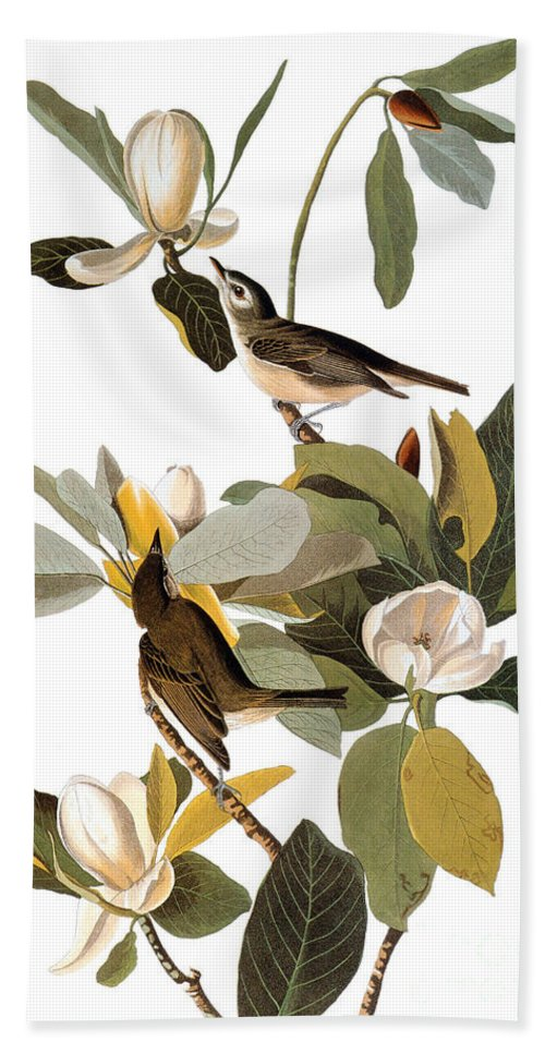 1838 Hand Towel featuring the photograph Audubon: Vireo by Granger