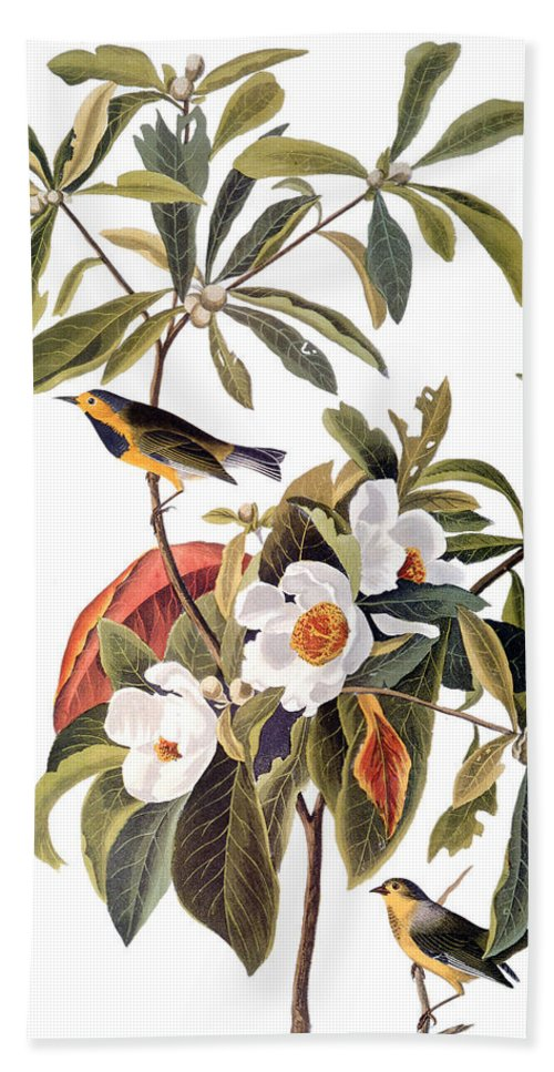1827 Bath Sheet featuring the photograph Audubon: Warbler, 1827-38 by Granger