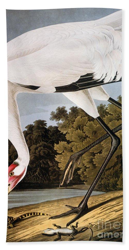 1827 Hand Towel featuring the photograph Audubon: Whooping Crane by Granger