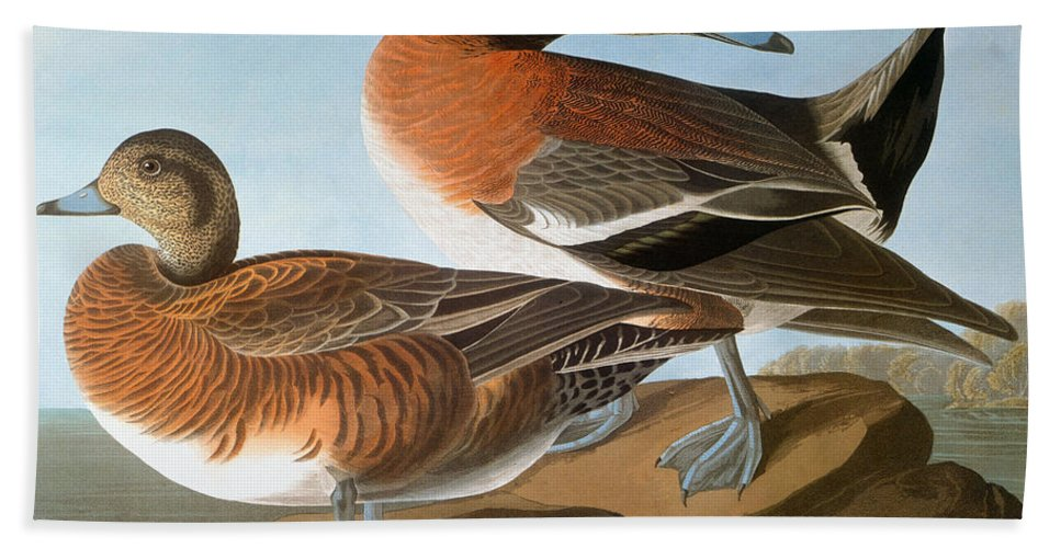 1827 Hand Towel featuring the photograph Audubon: Wigeon, 1827-38 by Granger