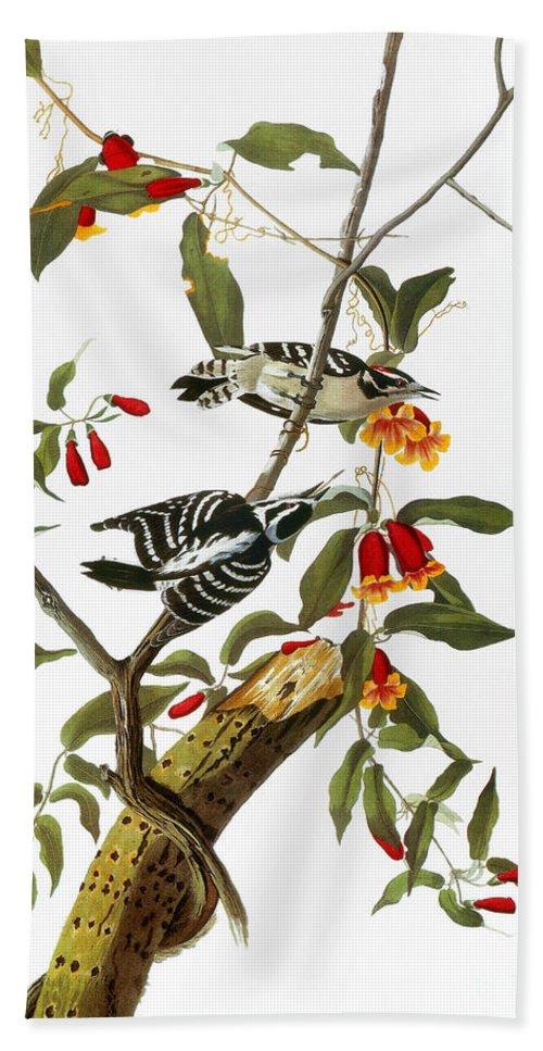 1827 Hand Towel featuring the photograph Audubon: Woodpecker, 1827 by Granger
