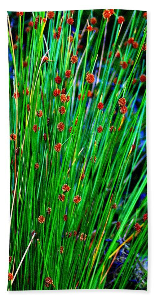 Native Bath Sheet featuring the photograph Australian Native Grass by Miroslava Jurcik