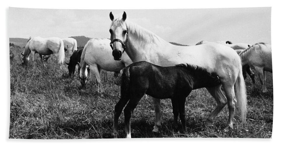 1965 Bath Sheet featuring the photograph Austria: Horse Farm by Granger