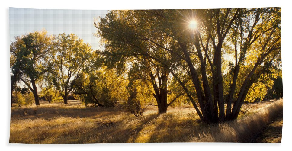 Fall Hand Towel featuring the photograph Autum Sunburst by Jerry McElroy