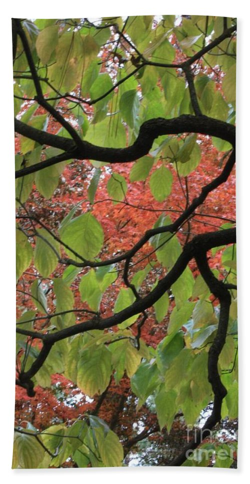 Fall Hand Towel featuring the photograph Autumn 7 by Carol Groenen