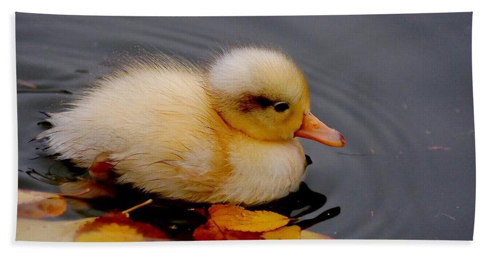 Bird Bath Towel featuring the photograph Autumn Baby by Jacky Gerritsen