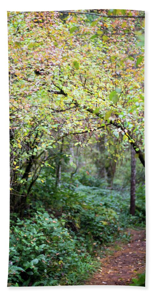 Nature Hand Towel featuring the photograph Autumn Colors In The Forest by Trance Blackman