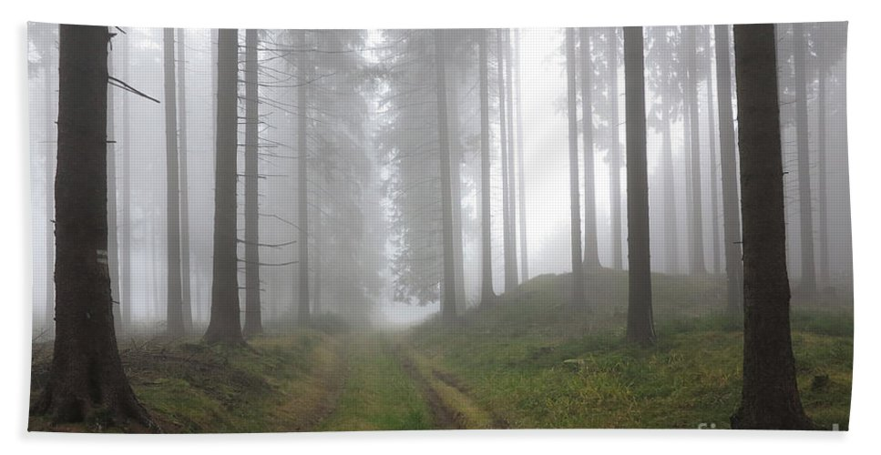 Slavkov Bath Sheet featuring the photograph Autumn Coniferous Forest In The Morning Mist by Michal Boubin